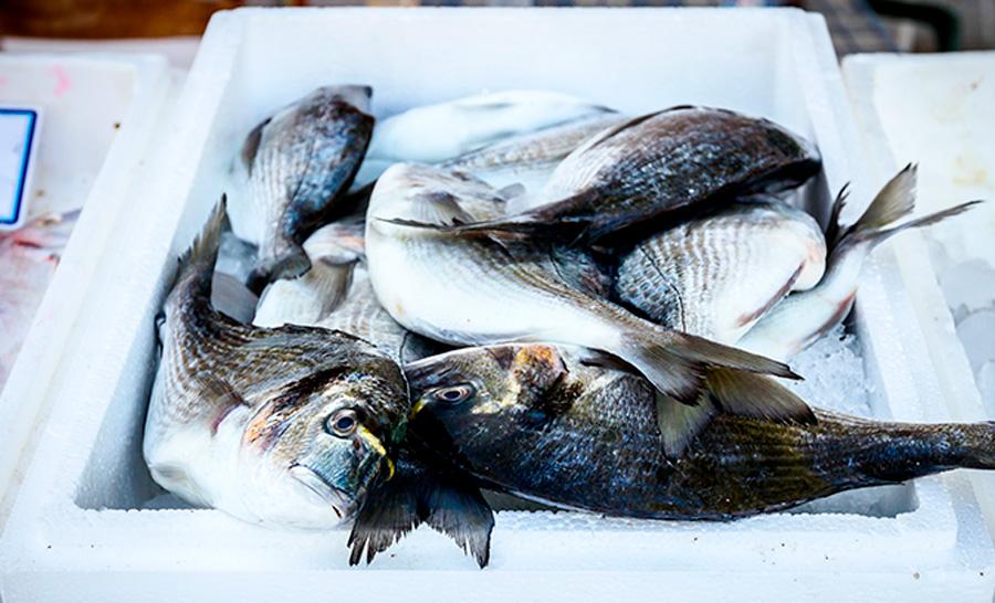 Transporte de pescados: 5 Vantagens da caixa térmica de EPS Isopor®